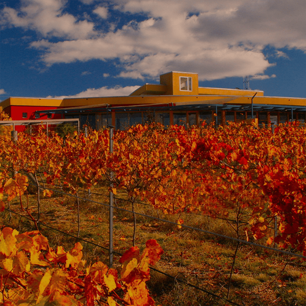 Contentious Character Winery