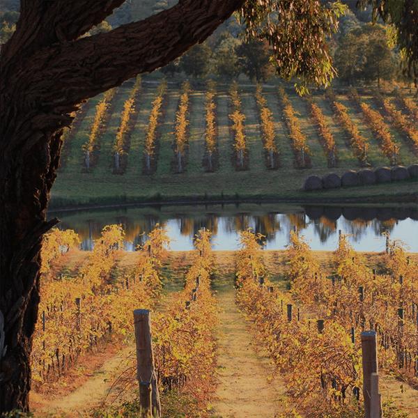 heathcote-wine-region