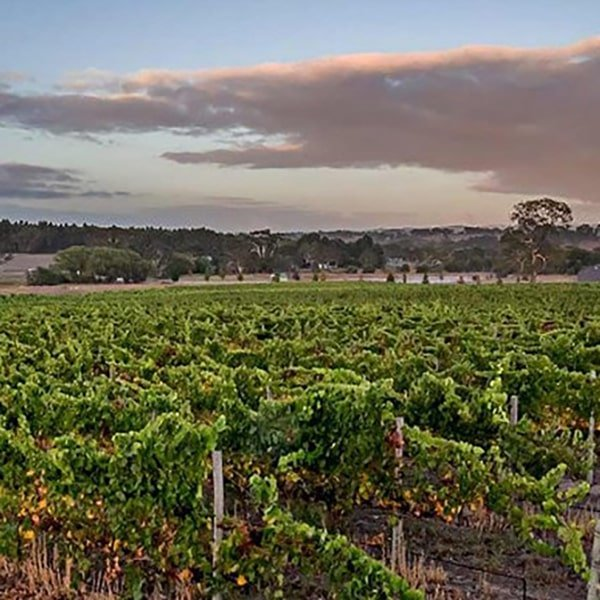 Wicks Estate Wines