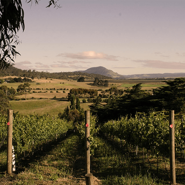 chatto wines